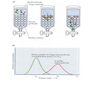 关于抗体标记及纯化